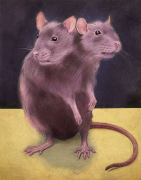 Two Headed Rat